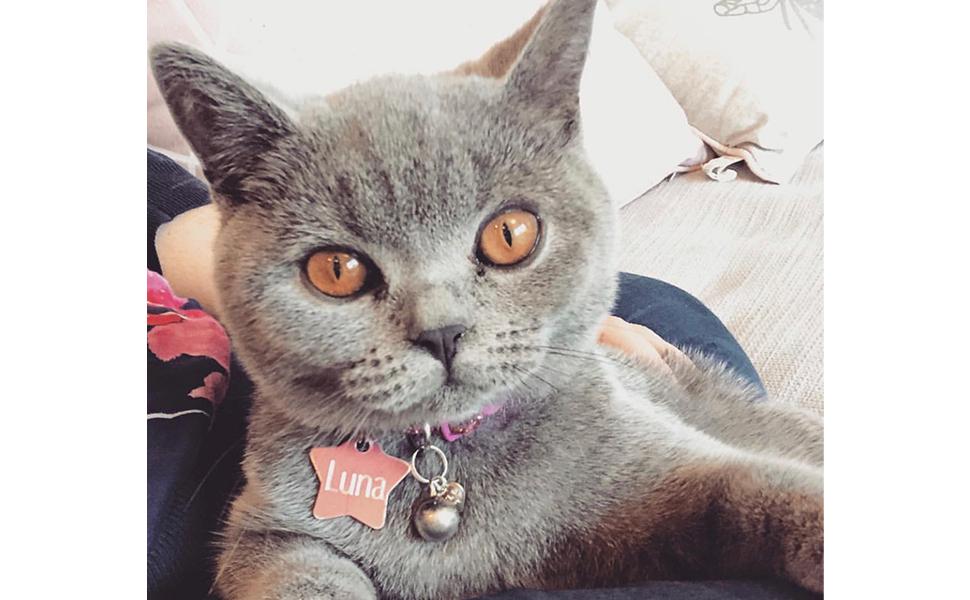 Luna header picture
