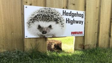 Glenwood Park Redrow Hedgehog - credit Andrea Ormesby